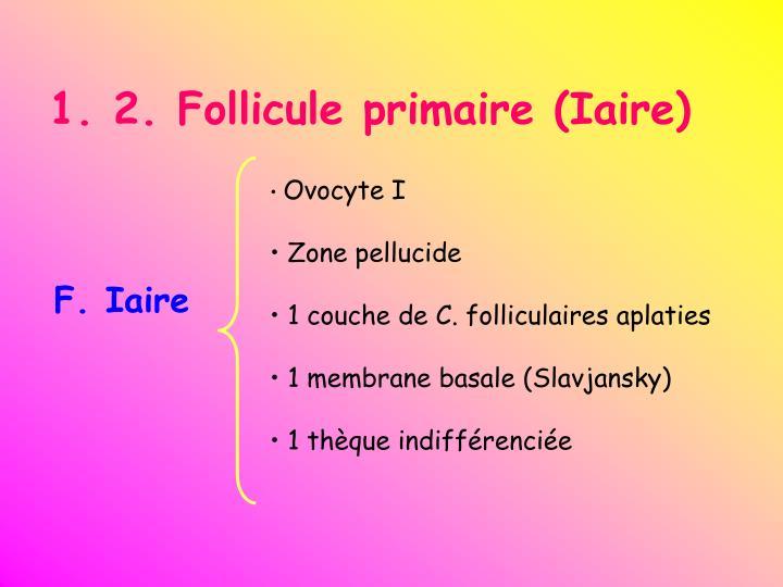 1. 2. Follicule primaire (Iaire)