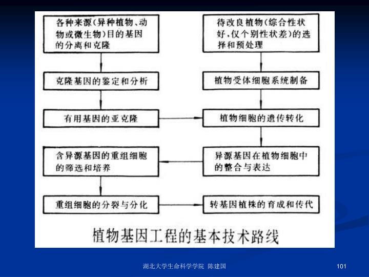 湖北大学生命科学学院  陈建国