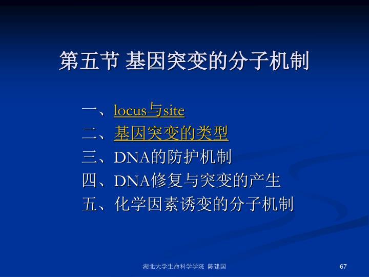 第五节 基因突变的分子机制