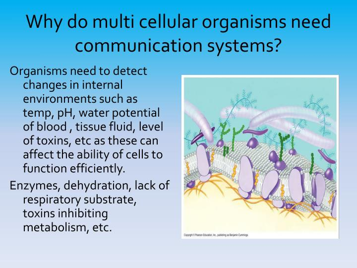 Why do multi cellular organisms need communication systems1