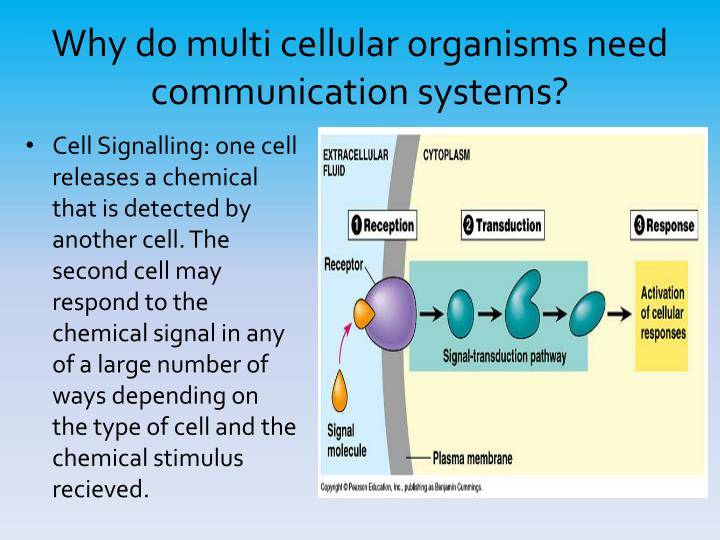 Why do multi cellular organisms need communication systems?
