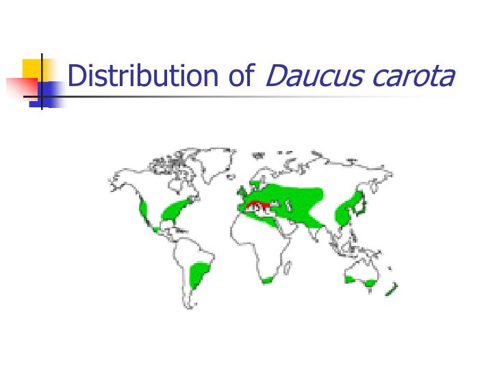 Distribution of