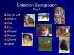 selection background day 1