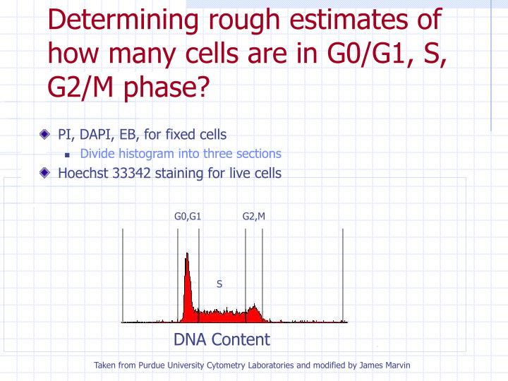 Determining rough estimates of how many cells are in G0/G1, S, G2/M phase?