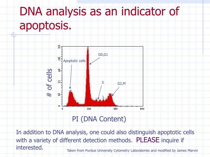 DNA analysis as an indicator of apoptosis.