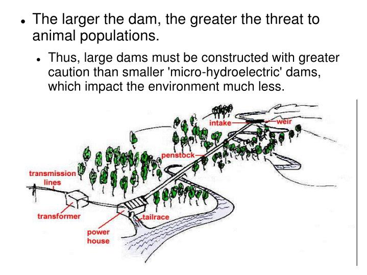 The larger the dam, the greater the threat to animal populations.