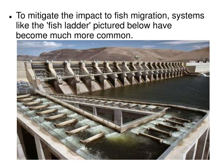 To mitigate the impact to fish migration, systems like the 'fish ladder' pictured below have become much more common.