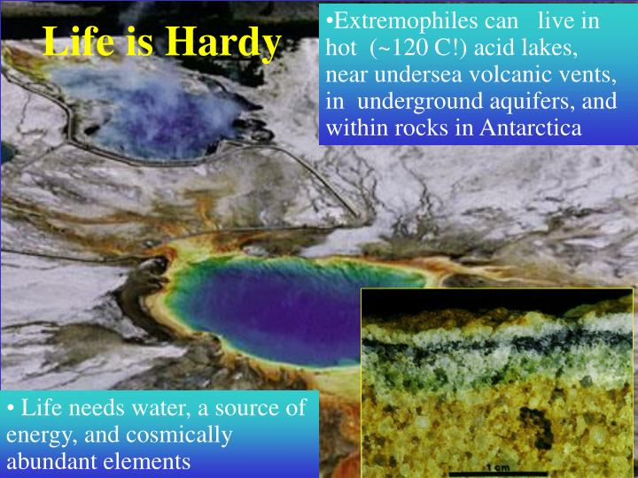 Extremophiles can   live in hot  (~120 C!) acid lakes,  near undersea volcanic vents, in  underground aquifers, and within rocks in Antarctica