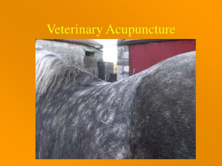 Veterinary Acupuncture