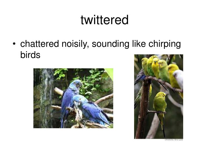 twittered
