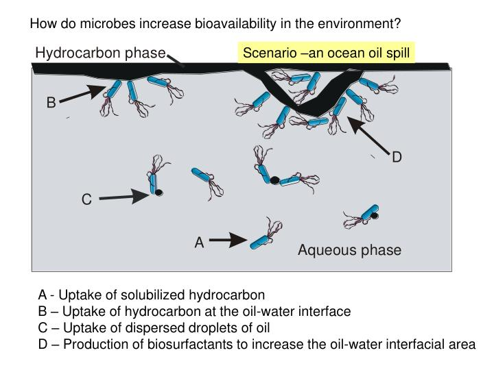 How do microbes increase bioavailability in the environment?