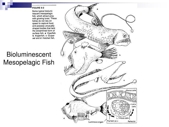 Bioluminescent Mesopelagic Fish