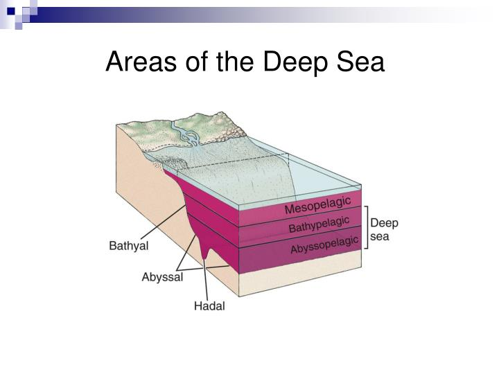 Areas of the Deep Sea