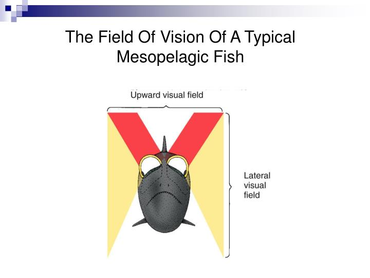 The Field Of Vision Of A Typical Mesopelagic Fish