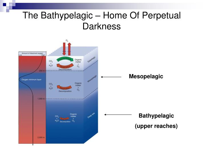 The Bathypelagic – Home Of Perpetual Darkness