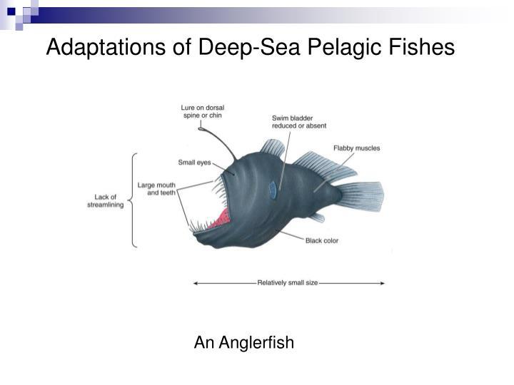 Adaptations of Deep-Sea Pelagic Fishes