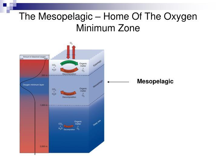 The Mesopelagic – Home Of The Oxygen Minimum Zone