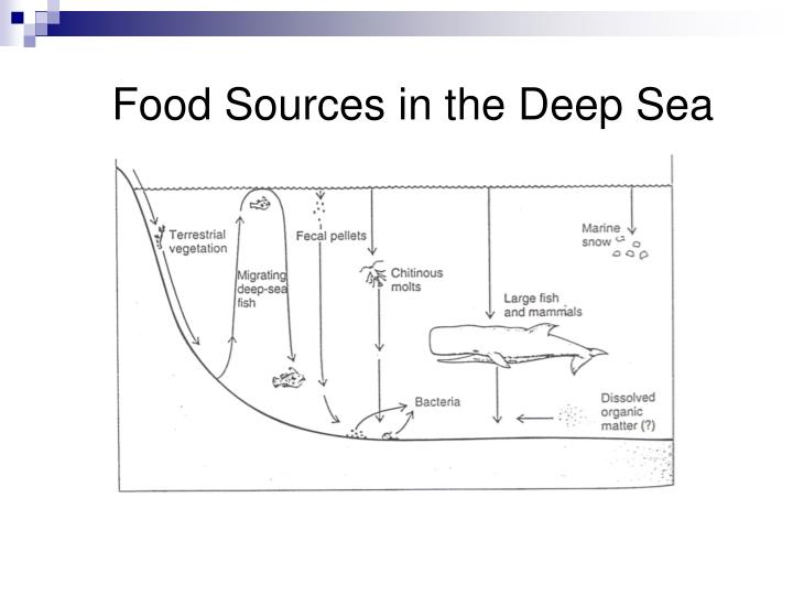 Food Sources in the Deep Sea