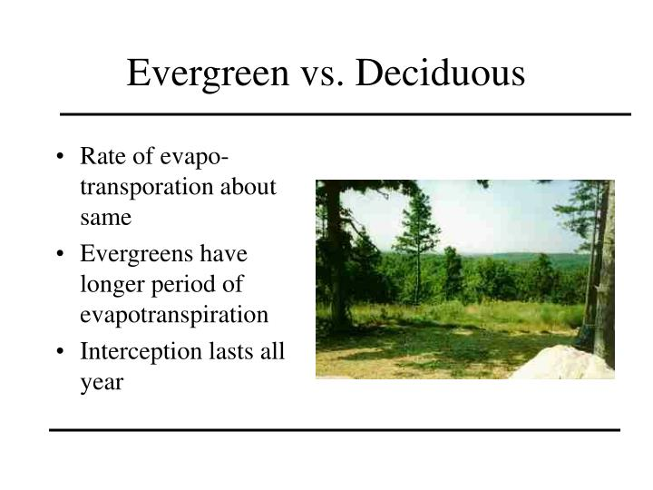 Evergreen vs. Deciduous