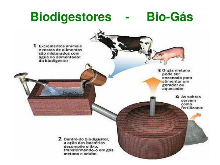 Biodigestores    -     Bio-Gás