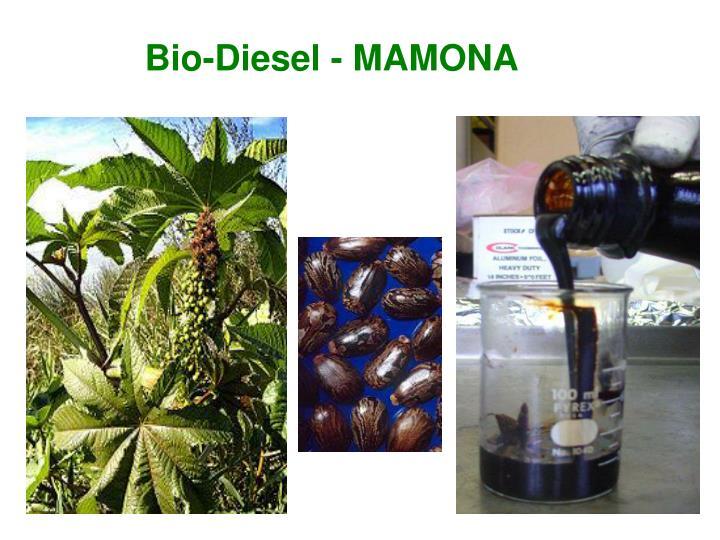 Bio-Diesel - MAMONA