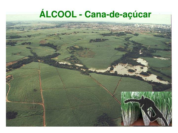 ÁLCOOL - Cana-de-açúcar