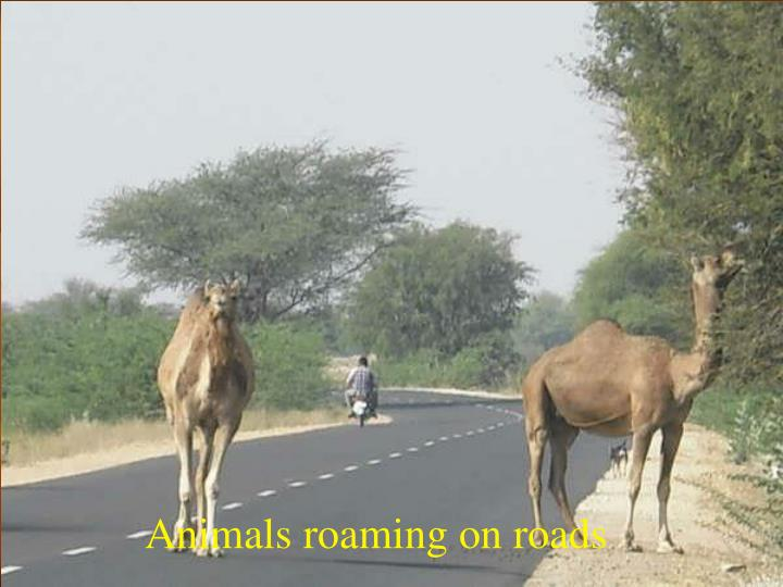 Animals roaming on roads