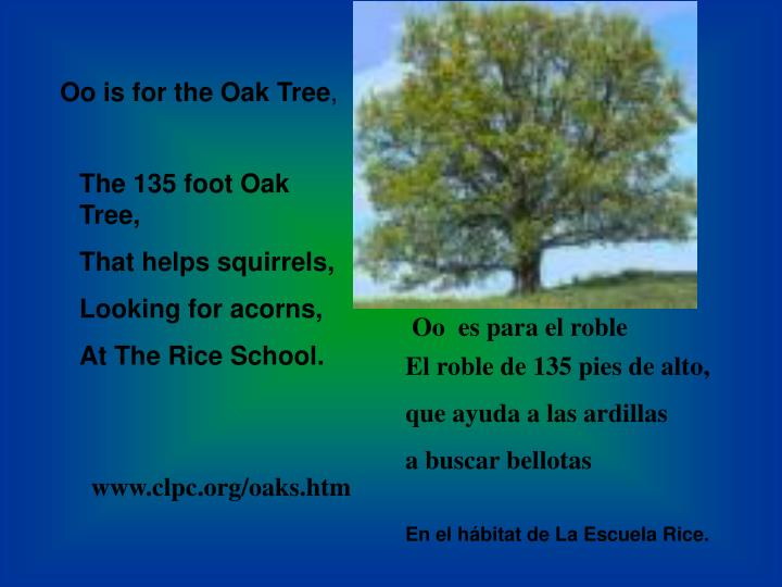 Oo is for the Oak Tree