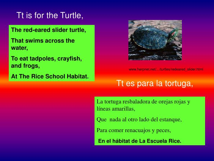 Tt is for the Turtle,
