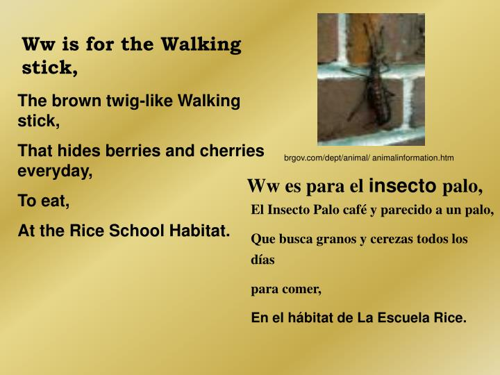Ww is for the Walking stick,