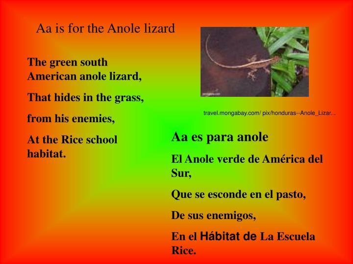 Aa is for the Anole lizard