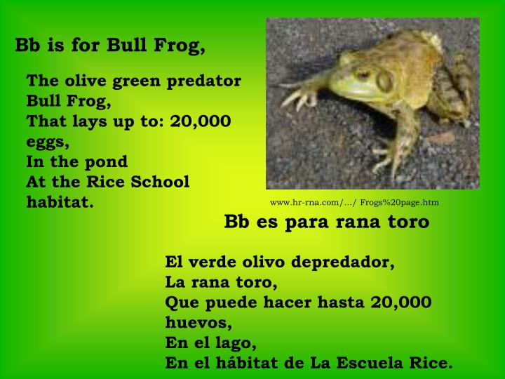 Bb is for Bull Frog,