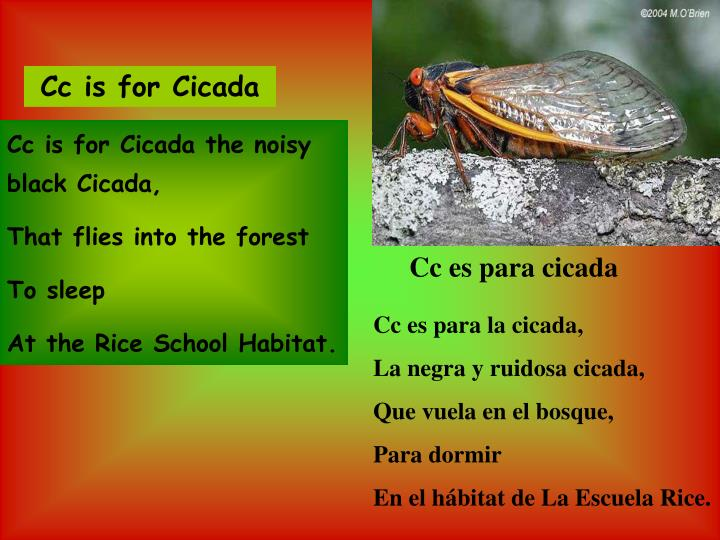 Cc is for Cicada