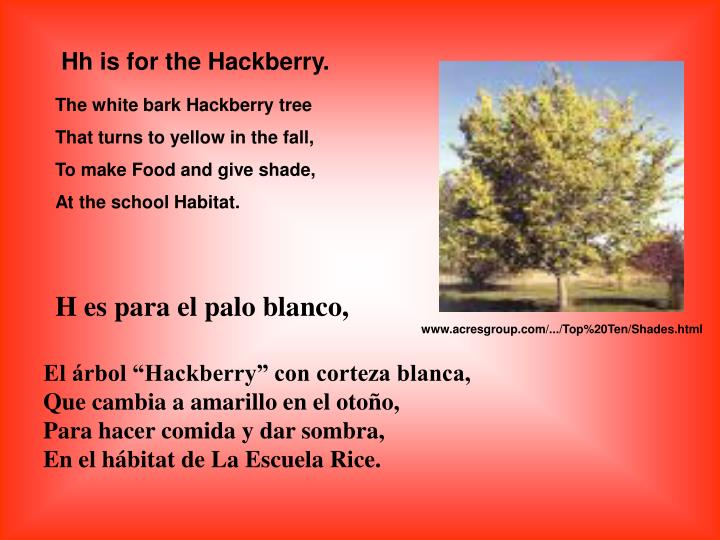 Hh is for the Hackberry.