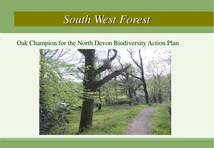 South West Forest