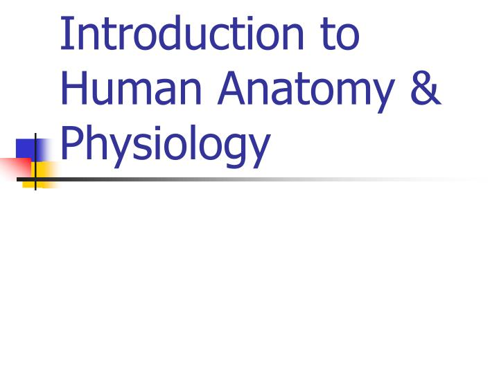 PPT - Introduction to Human Anatomy & Physiology PowerPoint ...