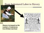 from indentured labor to slavery
