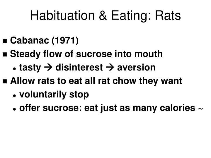 Habituation & Eating: Rats
