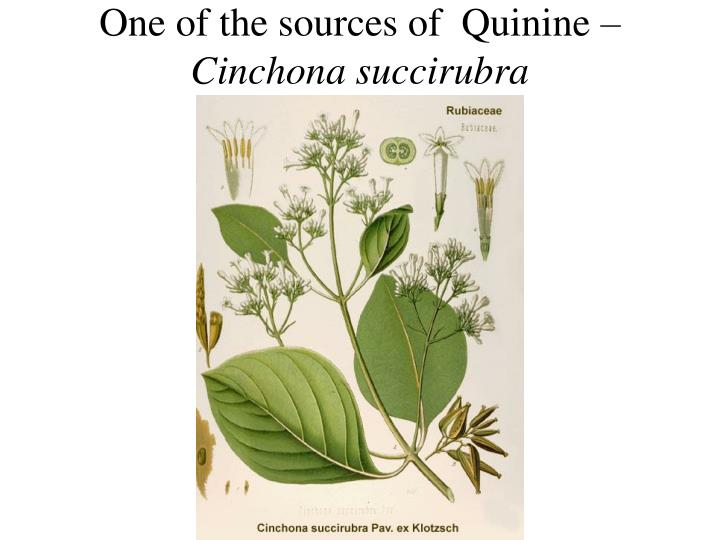 One of the sources of  Quinine –