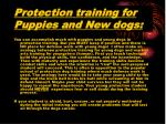 protection training for puppies and new dogs