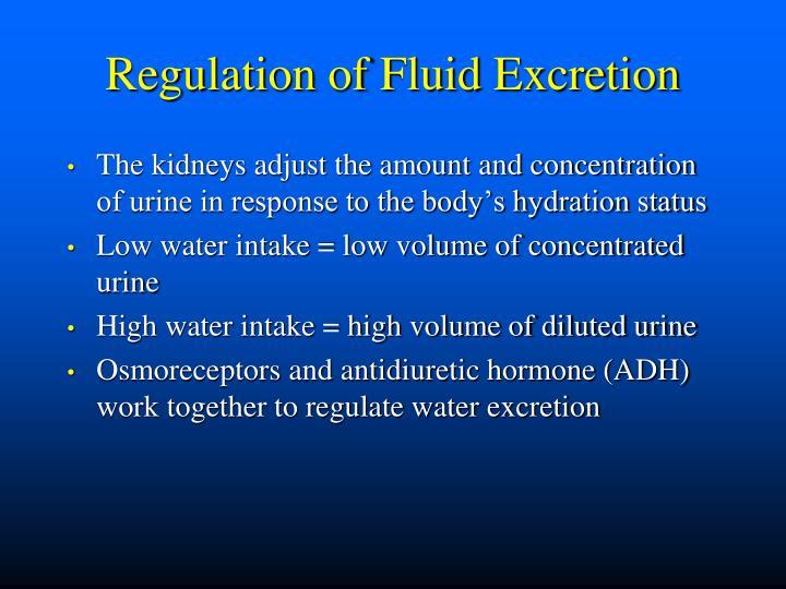 Regulation of Fluid Excretion