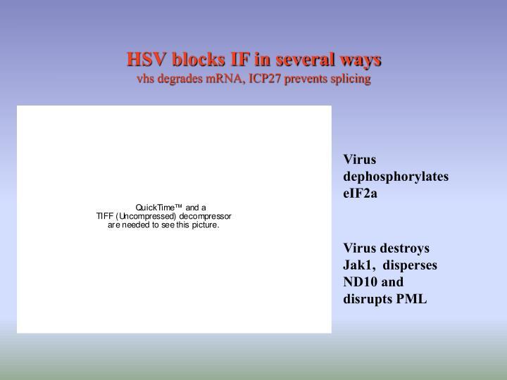 HSV blocks IF in several ways