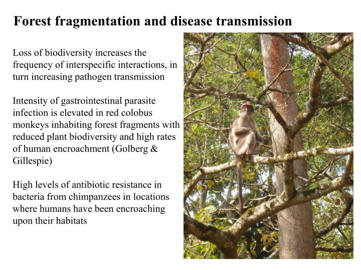 Forest fragmentation and disease transmission