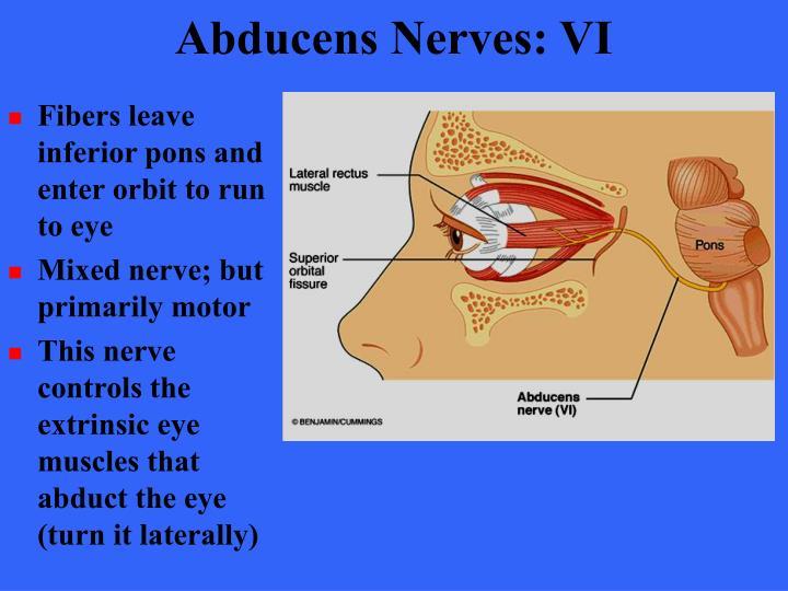 Abducens Nerves: VI