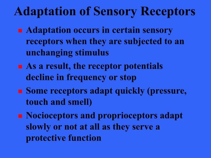 Adaptation of Sensory Receptors