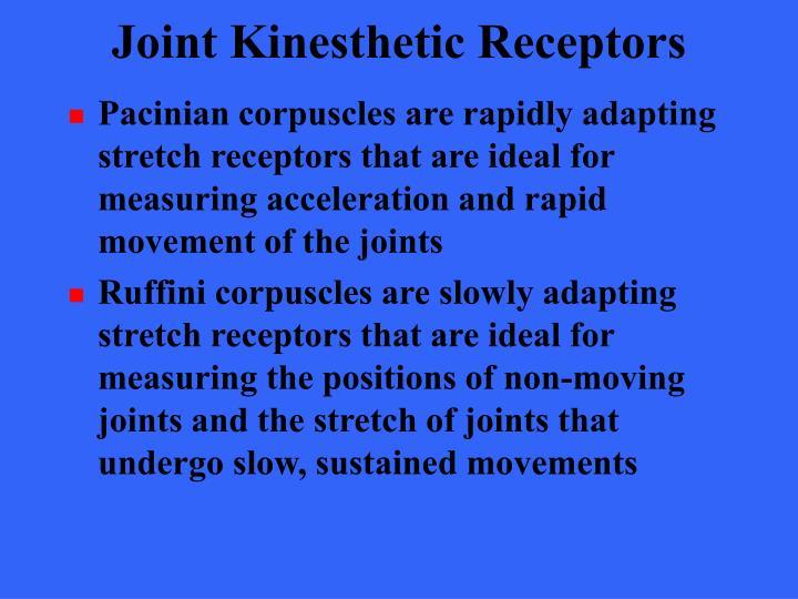 Joint Kinesthetic Receptors