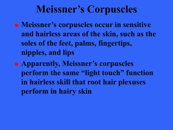 Meissner's Corpuscles