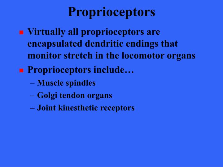 Virtually all proprioceptors are encapsulated dendritic endings that monitor stretch in the locomotor organs