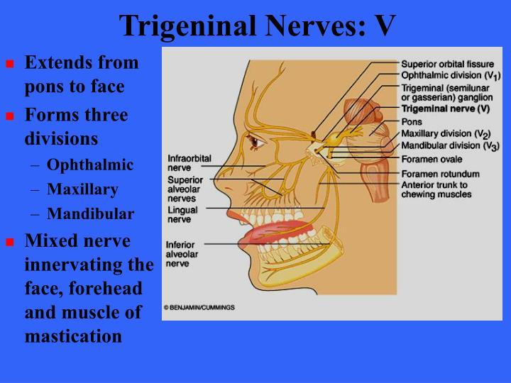 Trigeninal Nerves: V