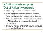 mtdna analysis supports out of africa hypothesis